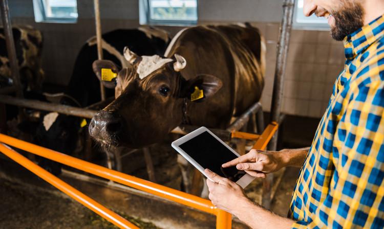 ecommerce rural
