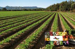 huerta-ecologica-de-disfruta-verdura