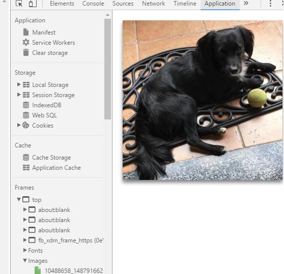 Captura de perro en instagram